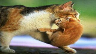 نحن والقطط وفلسطين
