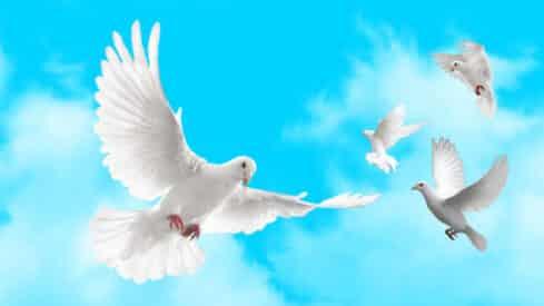 محمد ﷺ رحمة مهداة