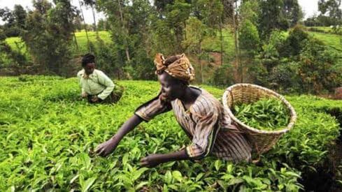 لماذا أفريقيا هي سلة الغذاء العالمي؟, إفريقيا, الزراعة الإفريقية, مشكل الغذاء في إفريقيا,
