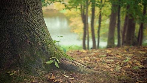 الشّجر الأخضر…أصل الطاقة ومصدر الحياة في محاججة إعجازية للملحدين, أصل الطاقة في القرآن, الإعجاز القرآني, علم النبات,