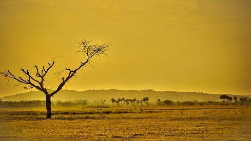 استراتيجيات زراعية لمواجهة التغيرات المناخية