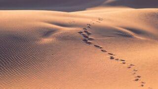 آثار أقدام في صحراء
